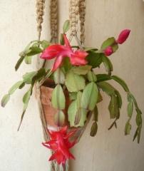 cactus, cactée, fleur, plante, plante d'appartement, nature, poésie, poème, poète