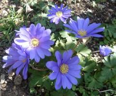 poésie, écriture, poèmes, poètes, fleurs, printemps,
