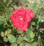 poésie,poèmes,poète,écriture,société,nature,saison
